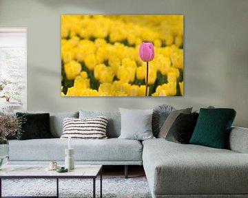 Roze tulp tussen gele tulpen van W J Kok