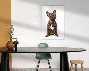 Franse bulldog pup / French bulldog looking up von Elles Rijsdijk