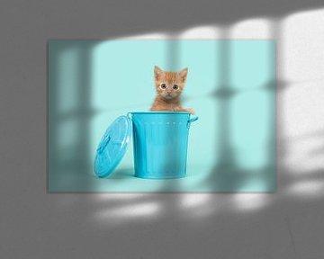 Rood kitten in het blauw / Red ginger 8 weeks old baby cat in a blue dustbin on a turquoise  von Elles Rijsdijk