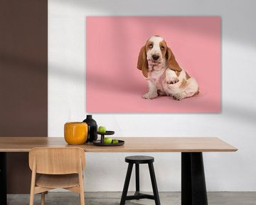 Basset pup / Cute playful white and tan basset hound puppy lifting its paw to