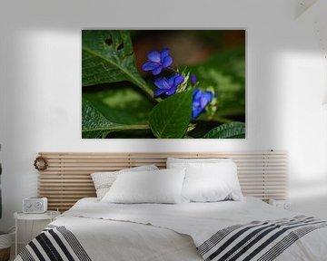 Blauwe Kleine Bloemetjes  van Vicky  Janssen