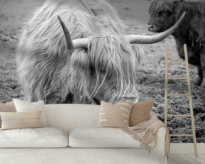 Impression: Schotse Hooglanders sur Marja van den Hurk