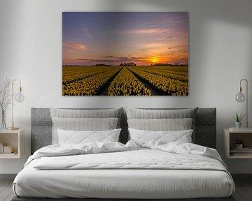 Prachtige zonsondergang boven het tulpenveld van Stefan Fokkens