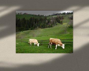 Grazende koeien in de natuur von Wilma Rigo
