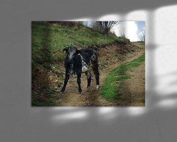 Koe op de weg van Wilma Rigo