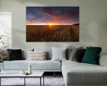 Landschap, korenveld bij zonsondergang tijdens zomerse dag  van Marcel Kerdijk