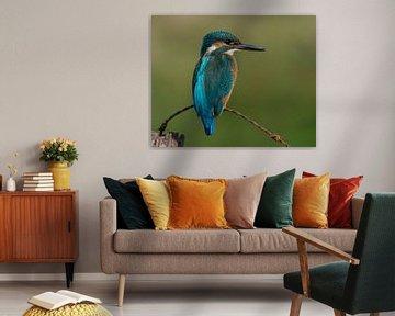 Eisvogel. von Vincent Willems