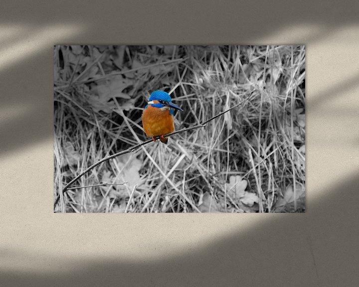 Sfeerimpressie: IJsvogel op een takje. van Andrea de Vries