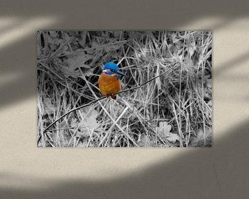 IJsvogel op een takje. van Andrea de Vries
