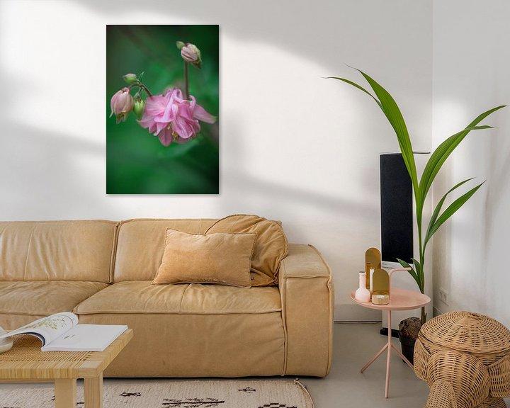 Sfeerimpressie: Roze akelei van Lily Ploeg
