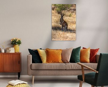 Rode kangoeroe von Joke Beers-Blom