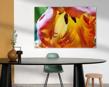 Papagei Tulpe von Ad Jekel