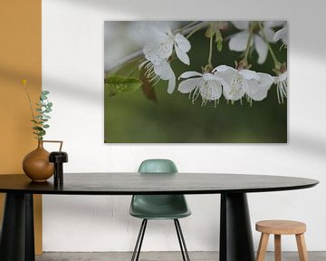 Witte kersenbloesem von Cora Unk
