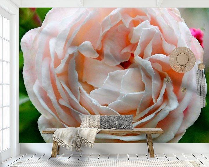 """Sfeerimpressie behang: Roos """"Compassion"""" in bloei in licht roze kleur in close-up van André Muller"""