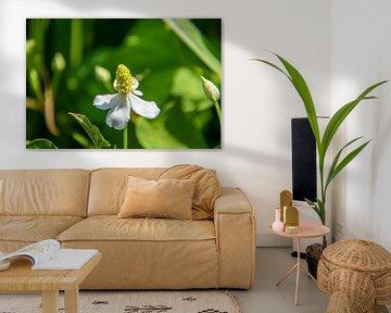 Close-up witte bloemen von Hans Tijssen