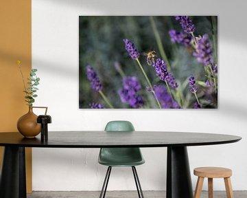 Lavendel met een bezige Bij von Hans Tijssen