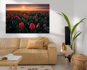 Rote Tulpen von Albert Dros