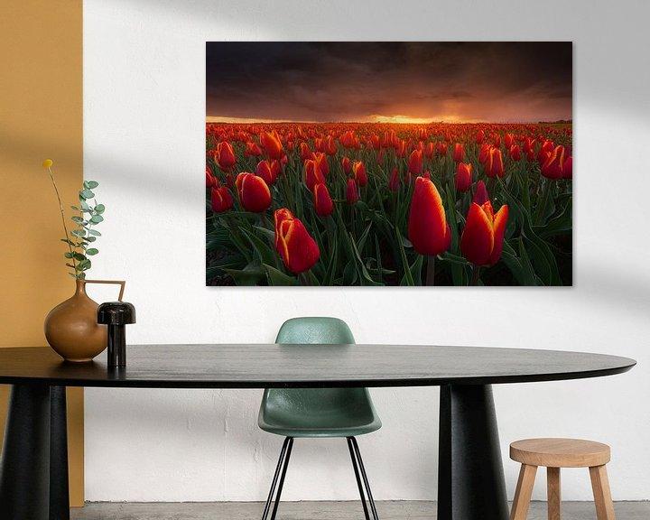 Sfeerimpressie: Rode Storm Tulpen van Albert Dros