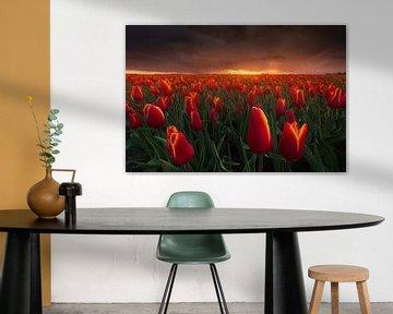 Rode Storm Tulpen van Albert Dros