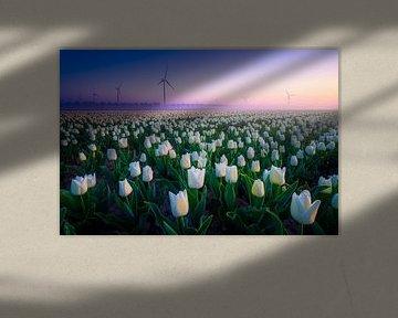 Weißes Tulpenfeld mit Windmühlen von Albert Dros