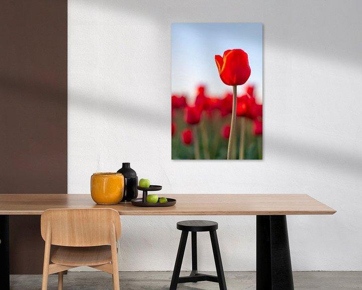 Sfeerimpressie: Bloeiende rode tulpen in een veld tijdens zonsondergang van Sjoerd van der Wal