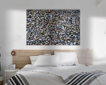 Muschelschalen von Ron van der Meer