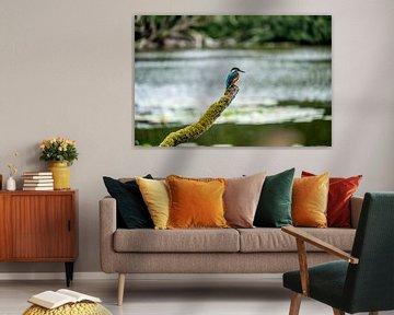 Eisvogel von Pieter Heine