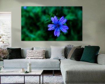 Blaue Blume allein von Jenny Heß