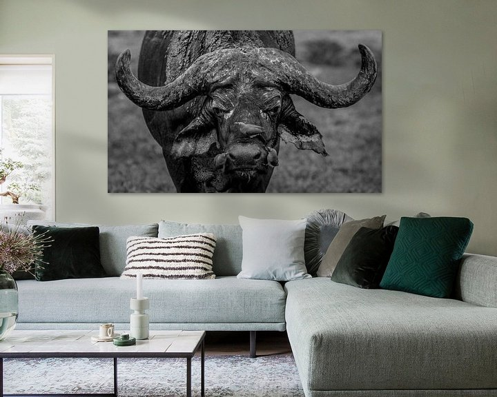 Beispiel: A Buffalo with 3 Red-Billed Oxpeckers on his nose von Jordi Woerts