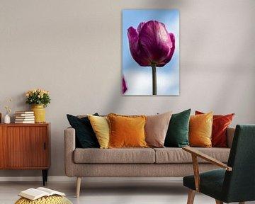 Dieproze tulp van Leonie Boverhuis