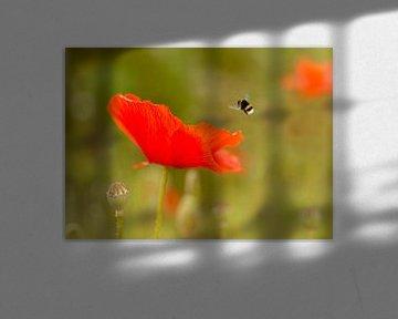 Mohn und Biene von Christa Thieme-Krus