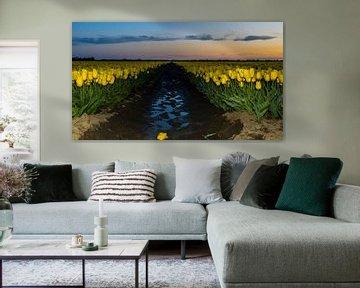 Blooming tulip fields! van Robert Kok