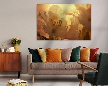 Blütenzauber von zwergl 0611