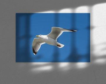 Zeevogel de Meeuw tegen een blauwe lucht van Tonko Oosterink