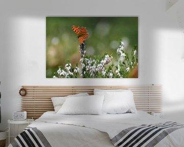 Oranje vlinder op witte bloem von Kim de Been
