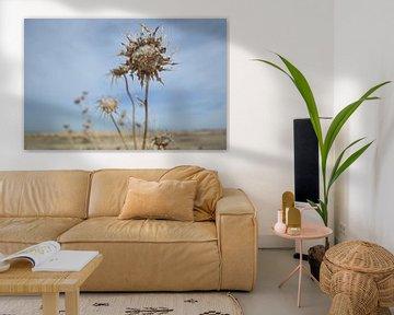 Distel in der Wüstenlandschaft von Ingrid Bargeman