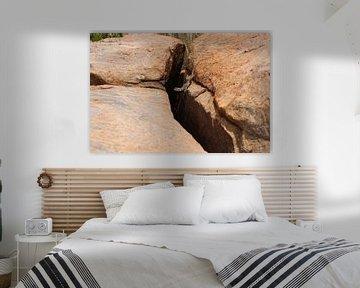 De salamander op de rotsen  von Kim van der Lee