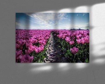 Tulip field von J.P. Valentine