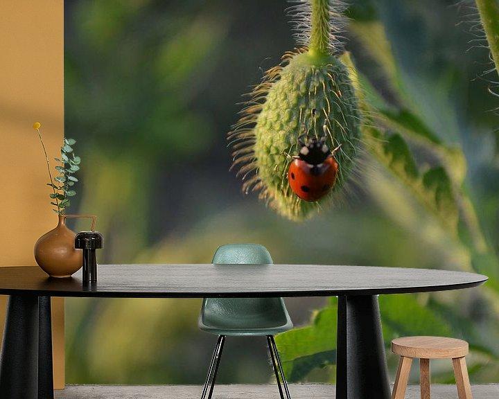 Sfeerimpressie behang: Klaproosknop met lieveheersbeestje van Ingrid Bargeman