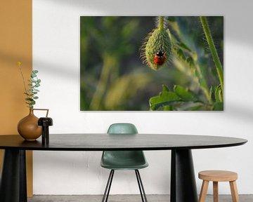 Klaproosknop met lieveheersbeestje van Ingrid Bargeman
