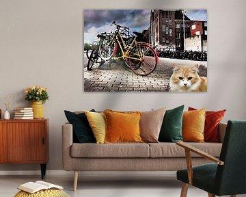 Amsterdam kat von MD JO