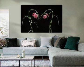 Kievitsbloemen / Blooming elegant snake's head fritillary flowers on a black ba van Elles Rijsdijk
