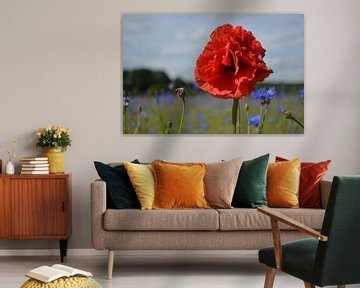 Rote Mohnblume von Ingrid Bargeman
