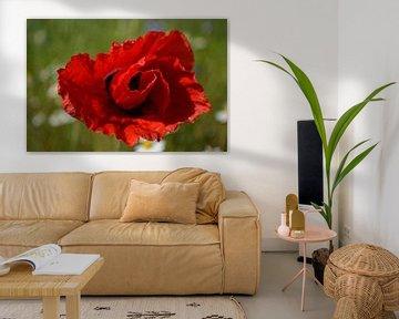 Nahaufnahme Rote Mohnblume von Ingrid Bargeman