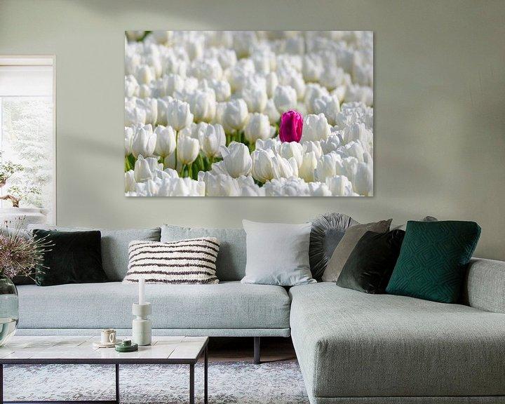Sfeerimpressie: Een gekleurde tulp in een veld van witte tulpen in bloei van Sjoerd van der Wal