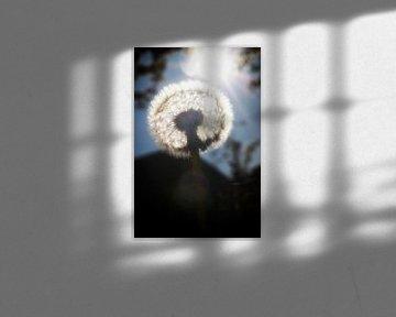 Im Licht von Jan van der Knaap