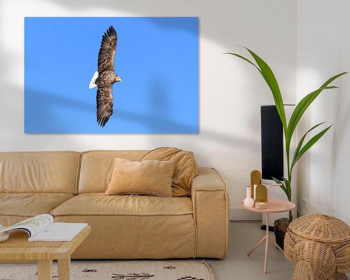 Sfeerimpressie: Zeearend  (Haliaeetus-albicilla) jaagt in de lucht boven een Fjord van Sjoerd van der Wal