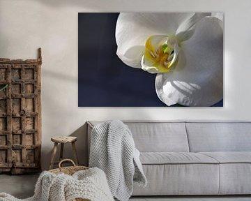 Weiße Orchidee von Ingrid Bargeman
