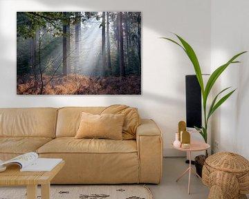 Zonnestralen in herfstbos van Elroy Spelbos