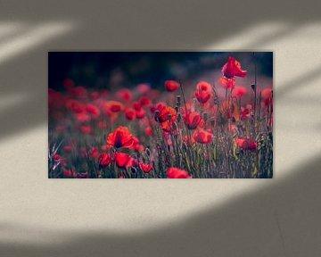 Ein Meer aus Rot von Ronald van der Zon